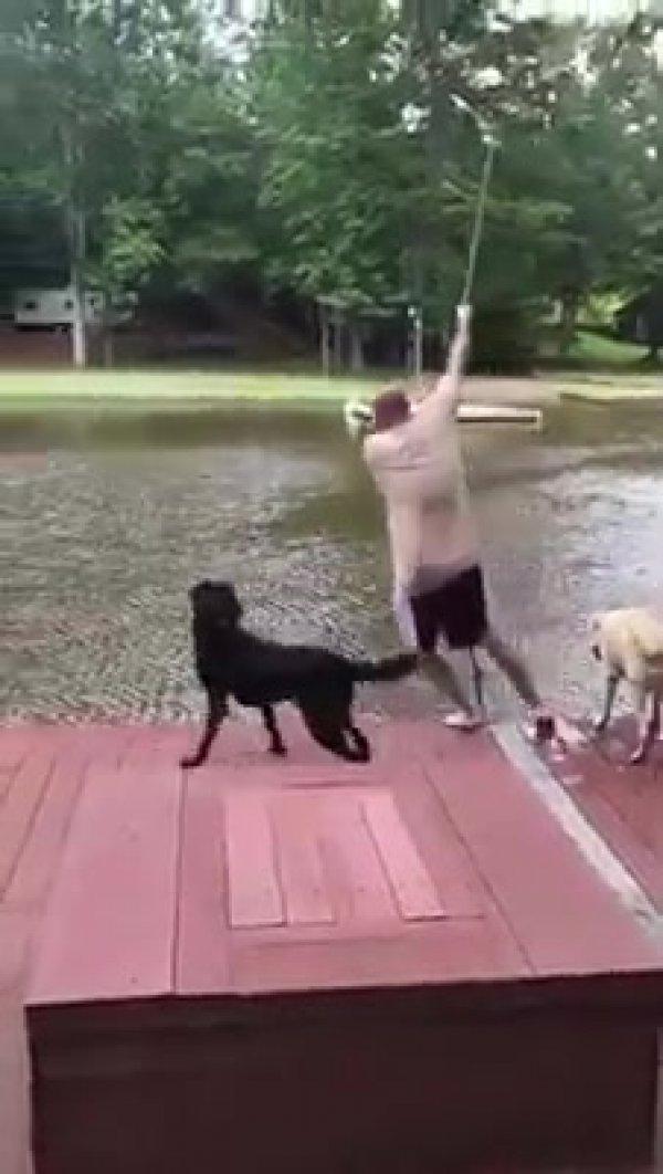 Quem tem cachorros, tem amigos para o que der e vier, confira!