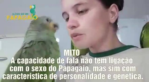 Só papagaio macho que tem a capacidade de falar? Descubra se isso é verdade!