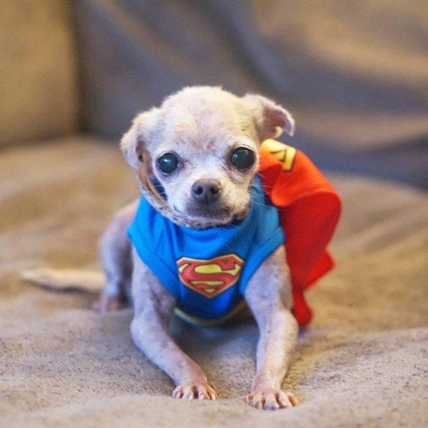 Steve Greig adota todos animais que tem menos chance de ser adotados, confira!!!