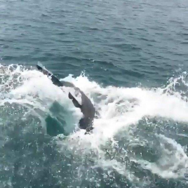 Tubarão tenta pegar isca de pescador no mar, olha só que imagem incrível!!!