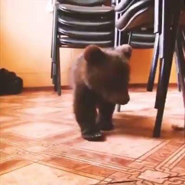 Ursinho órfão resgatado é muito fofo, vale a pena ver esse video.
