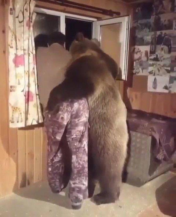 Urso indo espionar na janela com o papai humano, que fofura de animal!