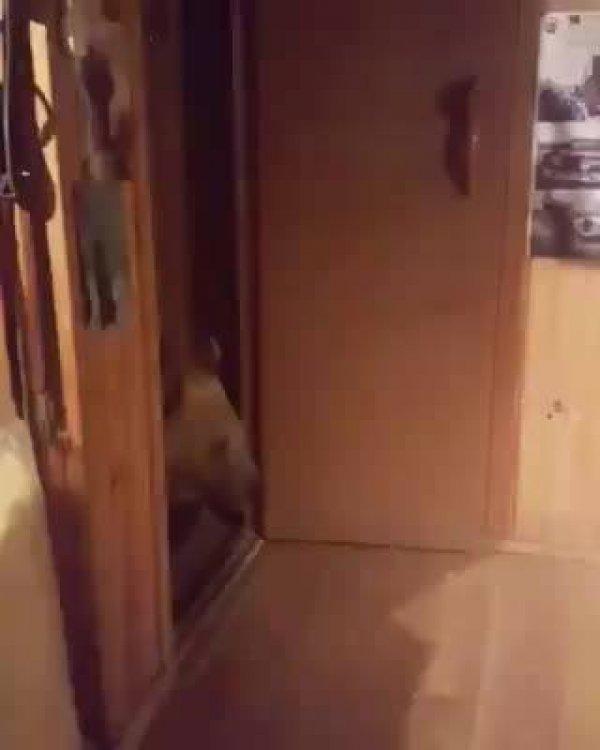 Urso vendo algo na janela com seu papai, olha só este abraço!!!