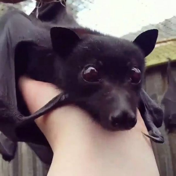 Vídeo com morcegos, este animal fantastico e muito importante!!!