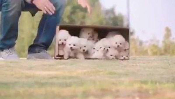 Vídeo com os cachorrinhos mais fofinhos que você já viu na vida!!!