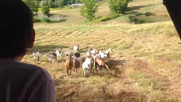 Vídeo com situações engraçadas com animais de estimação, eles são demais!!!