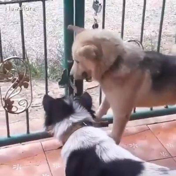 Vídeo com situações engraçadas de animais, eles fazem de tudo para fugir!!!