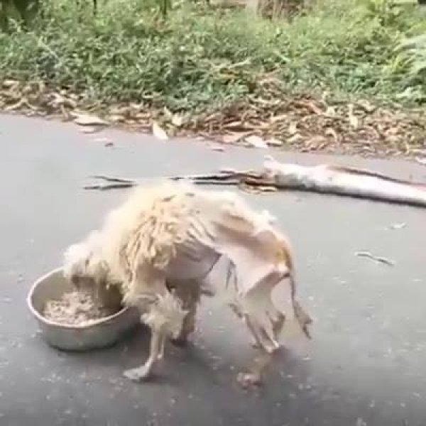 Video de cachorro que vai fazer você se emocionar, abandono de animais é triste!