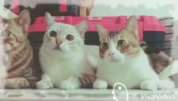 Video de gatos para compartilhar no Facebook, veja que fofura esses animais!