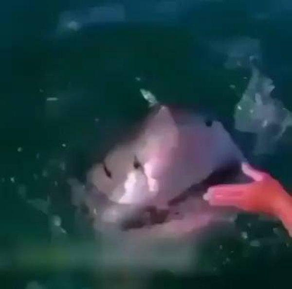 Vídeo de humanos e animais selvagens, este mundo é magnifico!!!