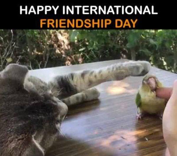 Vídeo em homenagem ao Dia internacional da Amizade! Olha só que meigo!!!