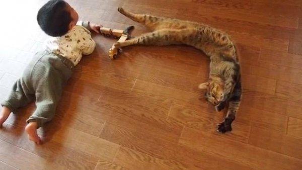 Vídeo mostrando um ano de convivência de um gatinho e um bebê!!!