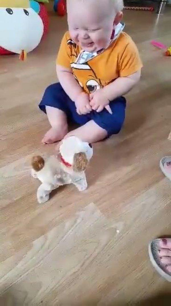 Bebê dando gargalhadas com com cachorrinho de mentira, é muita fofura!!!