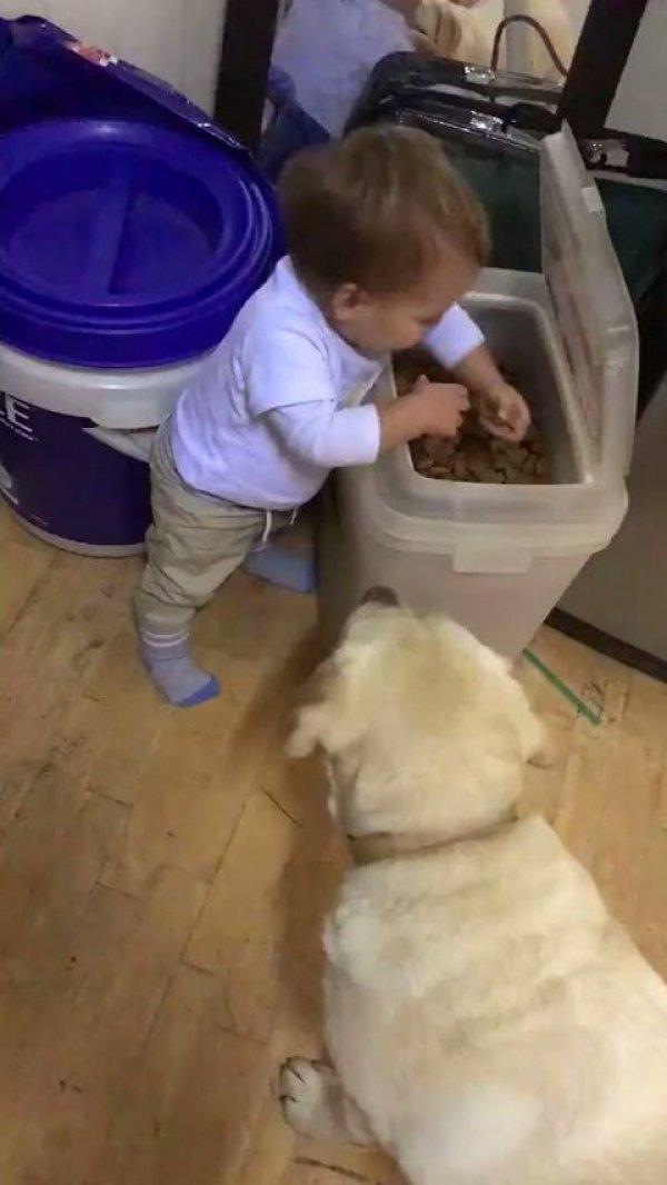 Vídeo com bebê dando comida para os cachorros, olha só que esperto!!!