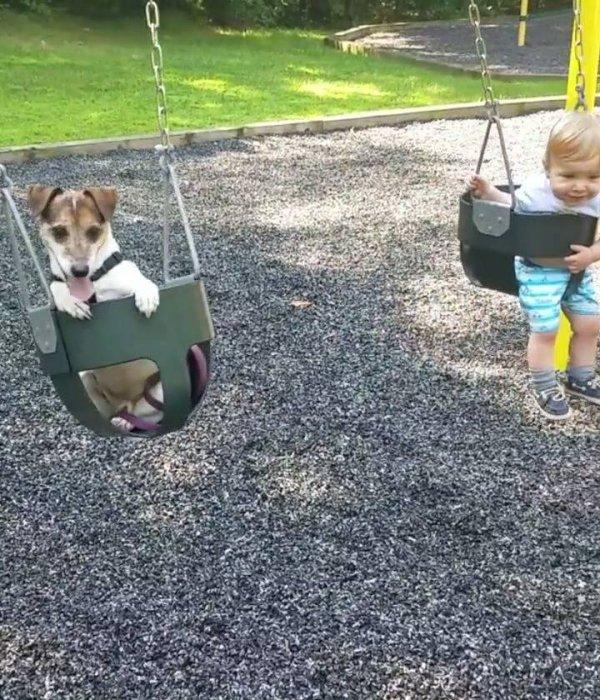 Crianças e animais - Uma amizade que dá muito certo, confira!