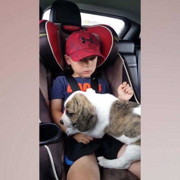 Crianças ganhando seus primeiros animais de estimação, as reações são lindas!