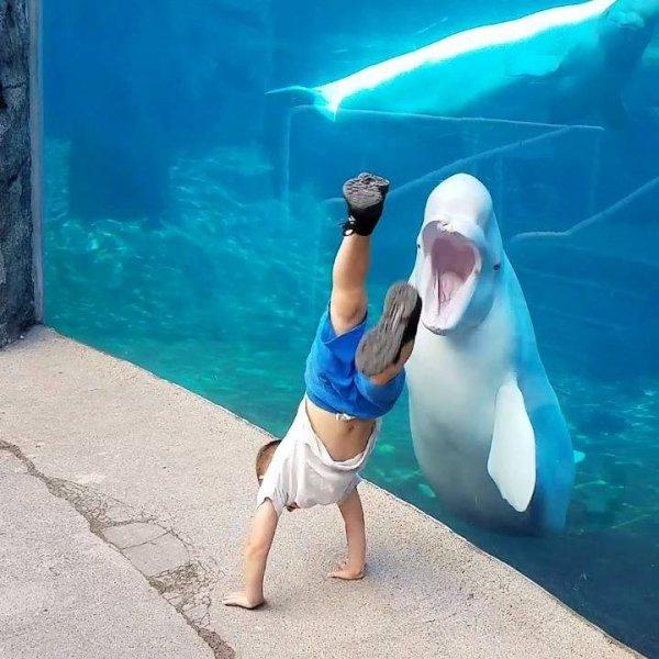 Crianças se divertindo com animais aquáticos, que divertido!