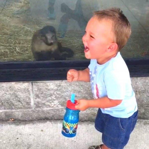 Crianças se divertindo no Zoológico - Esses animais fazem toda a diversão!