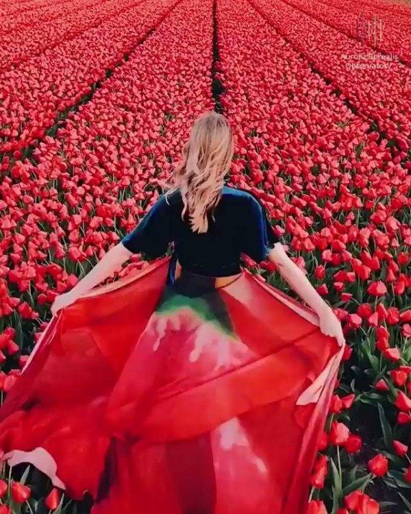 Impressionante campo de tulipas na Holanda, veja que coisa mais linda!!!
