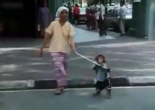 Macaco ajudando deficiente visual a atravessar a rua, impressionante!