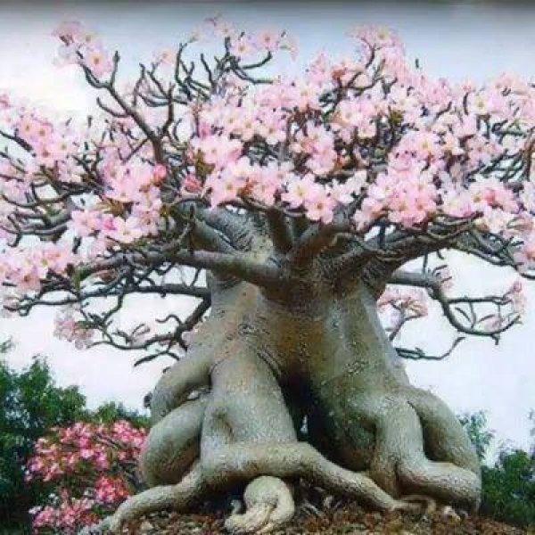As árvores mais incríveis da natureza, você vai se surpreender!