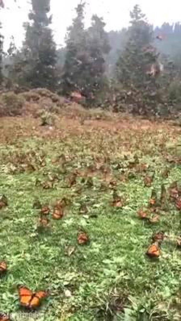 Campo cheio de borboletas, a natureza é espetacular, confira!!!