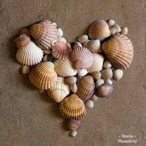Conchas que são verdadeiras obras de artes, a natureza é perfeita!