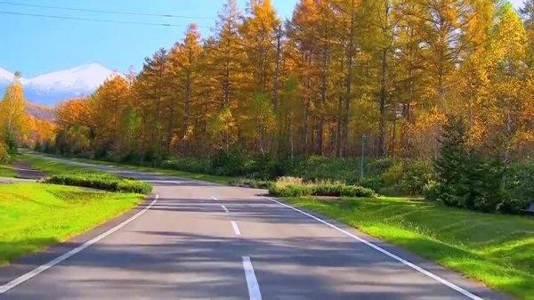 Estrada com arvores em época de outono, veja que lindas imagens!!!