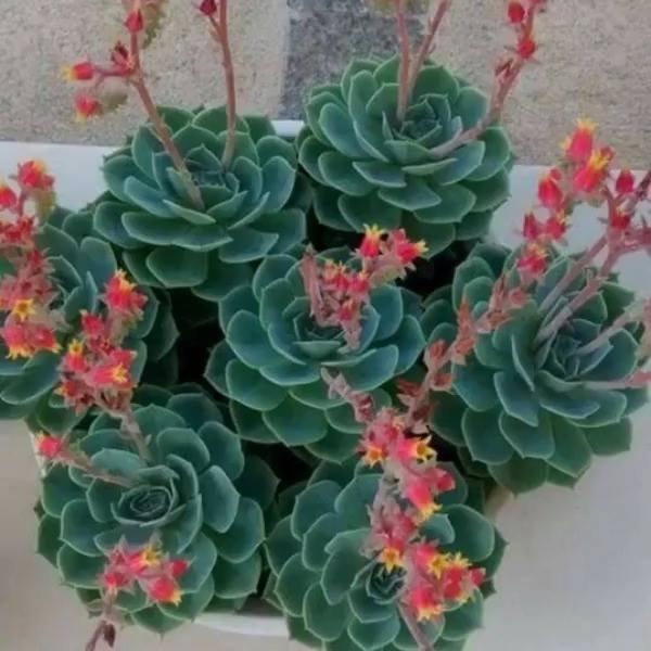 Flores Ornamentais, veja como são lindas, parecem até de mentira!!!