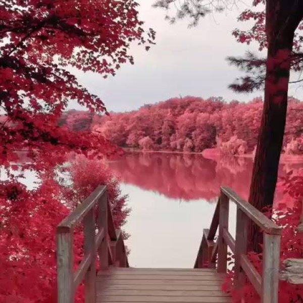 Lago rodeado por arvores com flores e folhas avermelhadas!!!