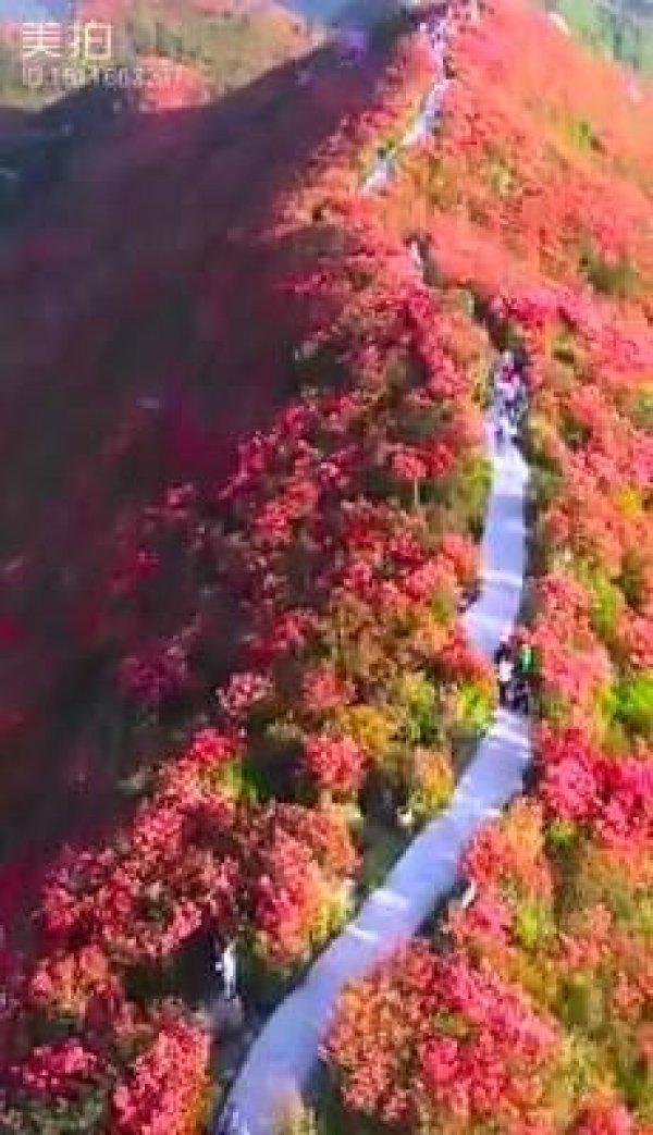 Montanha com flores lindas, um lugar que parece de mentira de tão lindo!!!!