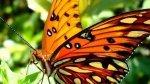 O encanto das borboletas, e seus mais lindos detalhes! Deus é perfeito!!!