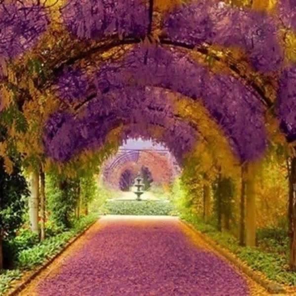 Parece de mentira estas imagens, mais não são, é a beleza da natureza!!!