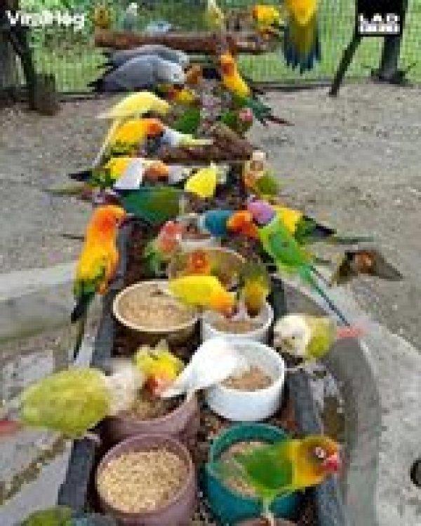 Pássaros na hora do almoço, veja a quantidade destes lindos animais!!!