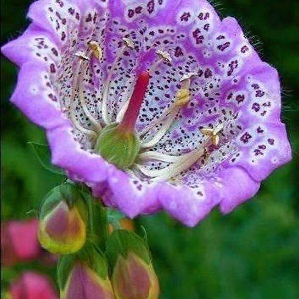 Que o silencio das flores a acalme seu coração! Espere, há tempo pra tudo!