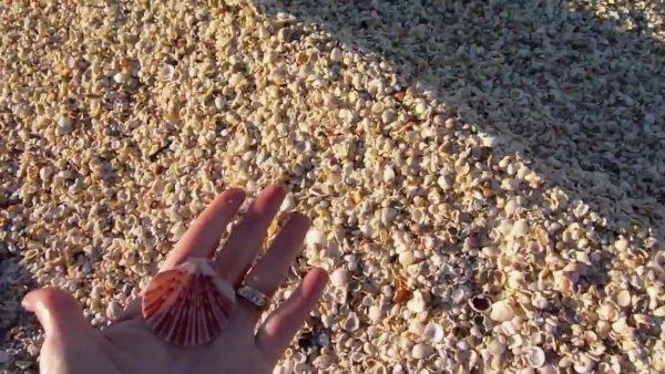 Ressaca do mar trouxe milhares de conchinhas, veja estas imagens impressionante!