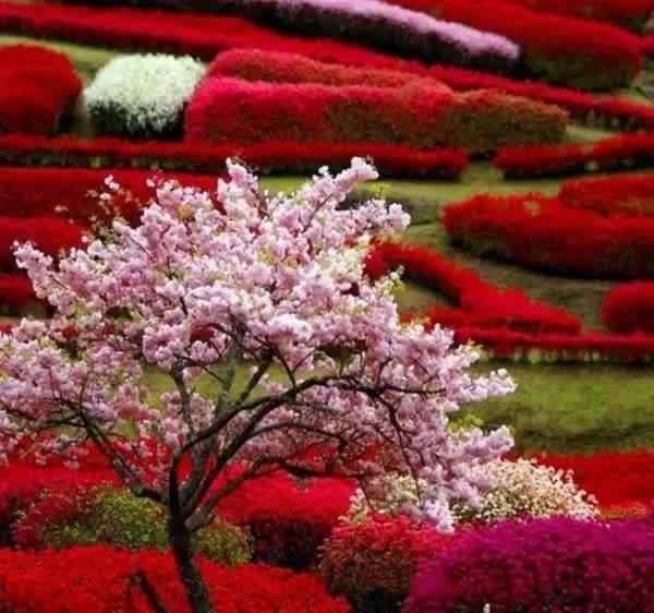 Vamos cuidar da natureza, para que ela não seja apenas lembrança!!!