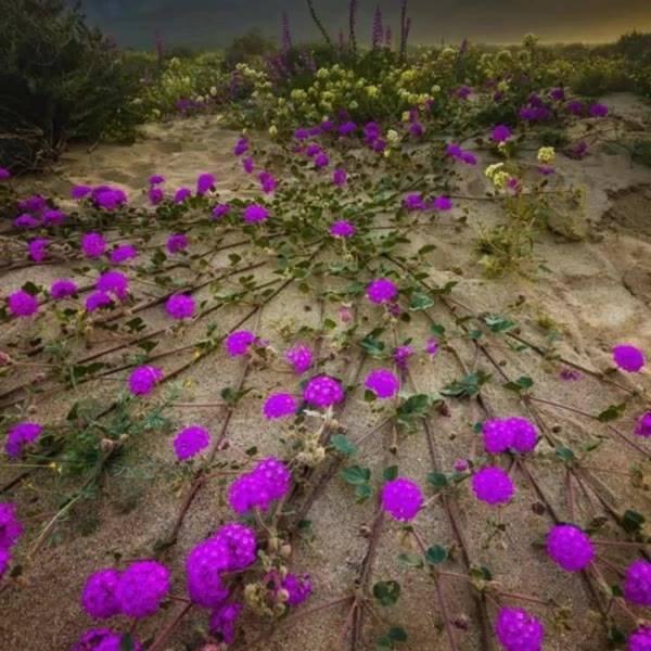 Vídeo com lindas fotos de campos floridos, um espetáculo da natureza!!!