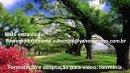 Mensagem de amizade para Facebook, os amigos são como as árvores!