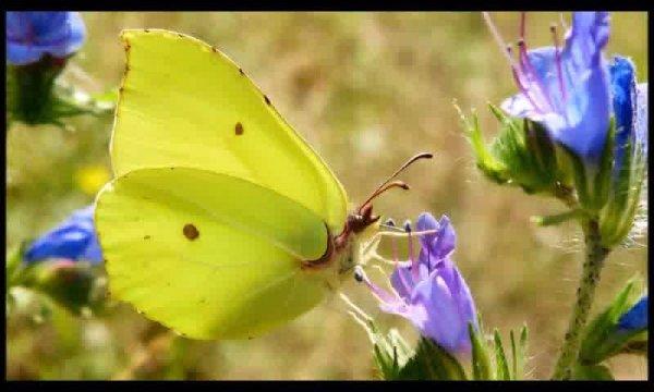 Mensagem de amizade. Que as borboletas levem toda leveza para seu dia!!!