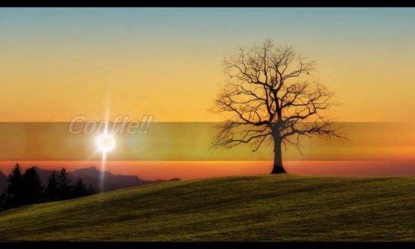 Boa tarde com mensagem de Deus, confie Nele e Ele cuidará de ti até o final!