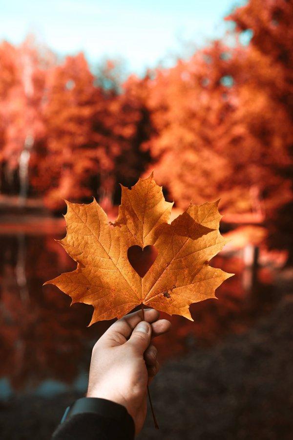 Mensagem de boa tarde com coração - Boa Tarde, Amor dos Meus Sonhos!