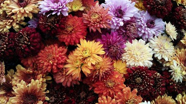 Mensagem de boa tarde com flores - Uma linda tarde a todos vocês!