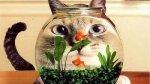 Mensagem de boa tarde com gatos, compartilhe esta fofura no Facebook!