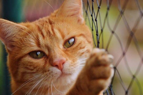 Mensagem de boa tarde fofa - Com imagens de animais fofinhos!
