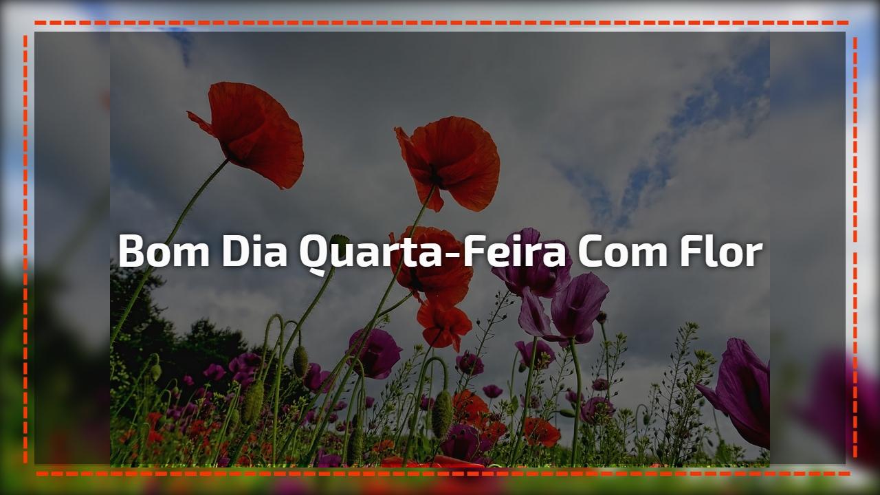 Vídeo De Bom Dia Com Lindas Flores De Fundo Para Enviar: Vídeo De Bom Dia Quarta-feira Com Flores Lindas