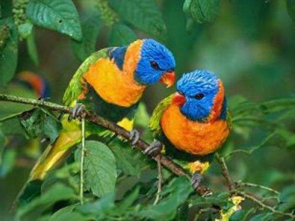 Dia 14 de março é dia da Proteção de todos animais, vamos respeitar os animais!