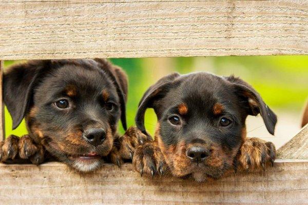 Dia 14 de Março é Dia Nacional dos Animais - Vamos cuidar dos nossos amiguinhos!