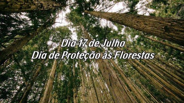 Dia 17 de Julho é Dia de Proteção às Florestas - Vamos fazer nossa parte!