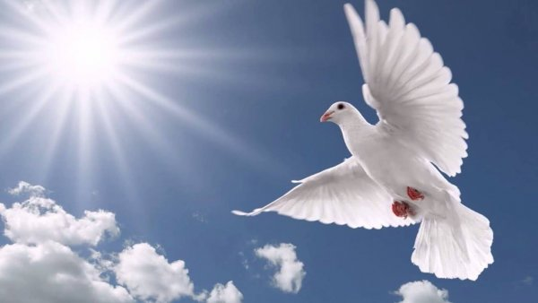 Dia do Espírito Santo é Dia 31 de Maio - Veja que linda oração!